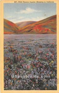 Wild Flowers, Lupine