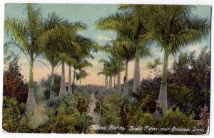 Royal Palms, Cocoanut Grove, Miami FL