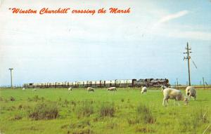 uk1880 winston churchill crossing the marsh herefordshire sheep real photo uk