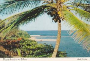 Tropical Splendor In The Bahamas, 1950-1970s