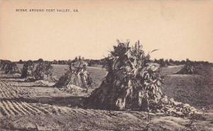 Scene Around Fort Valley, Haystacks, Fort Valley, Georgia, 1920-1940s