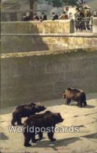 Bern Swizerland, Schweiz, Svizzera, Suisse Strengraben Bears  Strengraben Bears