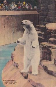 Polar Bear Pit Forest Park Zoo Saint Louis Missouri 1943