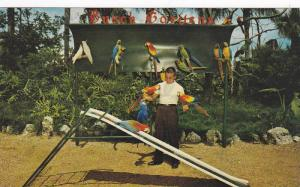 Colored Parrots, Macaws, Sophie on the Slide, Bidweiser Brewery, Tampa, Flori...
