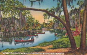 Florida Canoeing On The Suwannee River