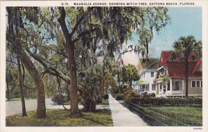 Florida Daytona Beach Magnolia Avenue Showing Witch Tree