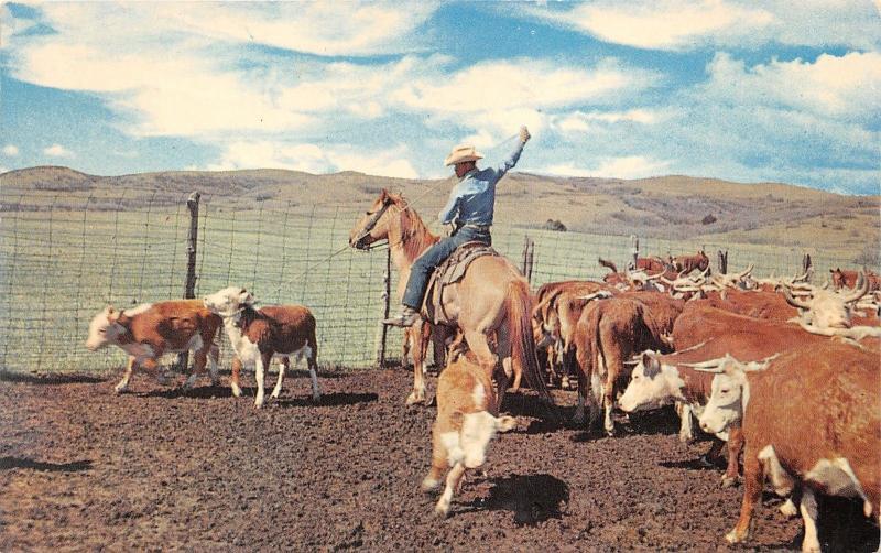 Texas~Roping~Cowboy on Horseback Roping Calf~PM 1962 West Columbia