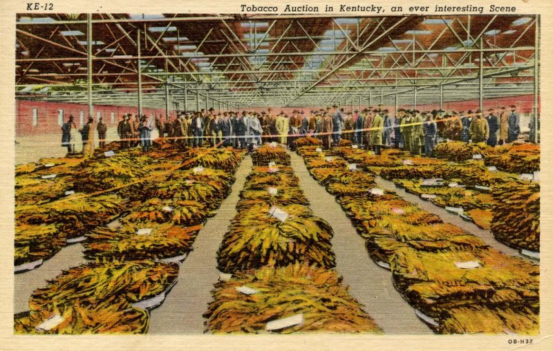 Tobacco Auction in Kentucky