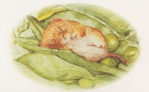 The Tale Of Johnny Town Mouse Timmie Willie Beatrix Potter Book Postcard
