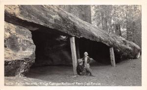 E33/ Kings Canyon National Park California Ca Postcard RPPC c50s Fallen Monarch
