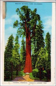 CA - General Sherman, Worlds Largest Tree, Sequoia Nat Park