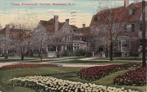 New York Rochester Tulips Portsmouth Terrace 1911