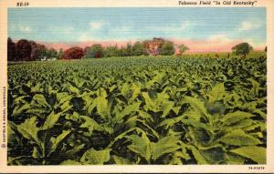 Kentucky Typical Tobacco Field Curteich