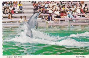 Dolphin Tail Walk, Dolphin Show, Sea World, San Diego, California, 50-70's