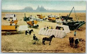 1910 California Ranching Postcard Gathering the Wheat San Leandro CA Cancel