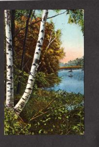MA Silver Birch Trees Botany Three Mile River Dighton Massachusetts Postcard