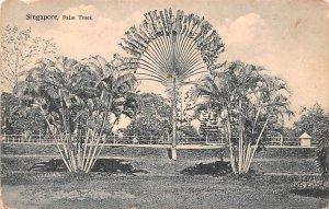 Palm Trees Singapore Unused