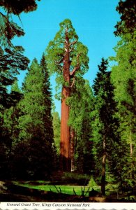 California Kings Canyon National Park The General Grant Tree