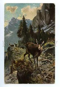 127988 HUNT Mountain by MULLER Vintage color PC