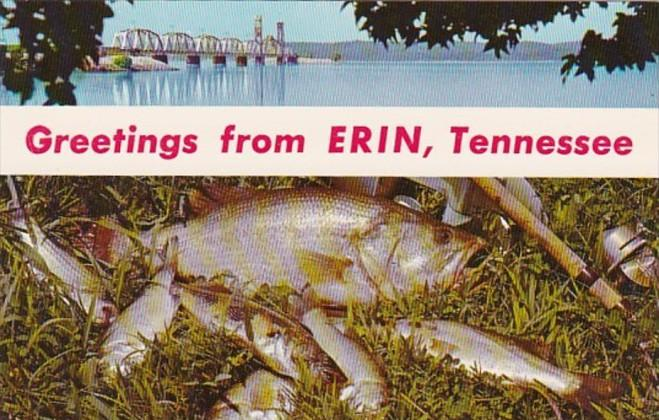 Kentucky Greetings From Erin Showing Kentucky Lake Bridge and Day's Catch Fis...