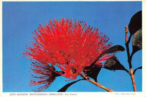 Rata Blossom -