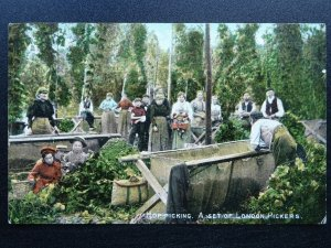 Kent Country Life HOP PICKING A Set of London Pickers c1905 Postcard by M.& L.