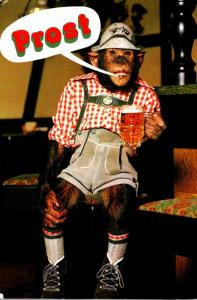 Humour Monkey With Beer Stein Prost 1997