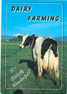 Vintage Postcards Dairy Holsteins Farming # 1492A