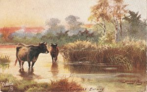 Harry Payne. Cows. Summer vening Tuck Oilette By Med and Stream Ser. PC # 9337