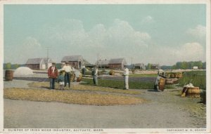 SCITUATE , Massachusetts , 1910-20s; Glimpse of Irish Moss Industry