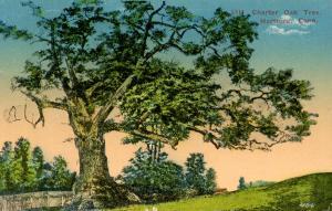 CT - Hartford. Charter Oak Tree