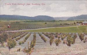 Oregon Young Fruit Orchard Near Roseburg 1913
