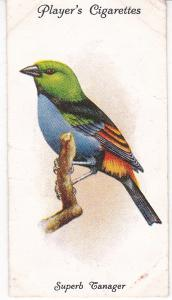 Cigarette Cards Playe Aviary and Cage Birds No 36 Superb Tanager