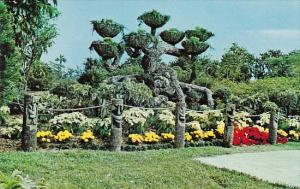 Florida Cypress Garden The Shangri La Tree At Cypress Gardens Conveys To The ...