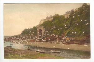 Looe , UK, 1910s   Sea Gulls