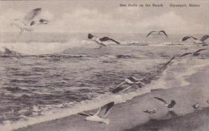 Maine Ogunquit Sea Gulls On The Beach Albertype