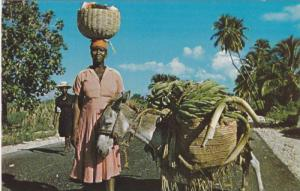 Vendor with basket on head, donkey with load of bananas on St. Marc road, Hai...