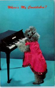 POODLE DOG   c1960s Postcard: Where's my CANDLEABRA? Comic LIBERACE Reference