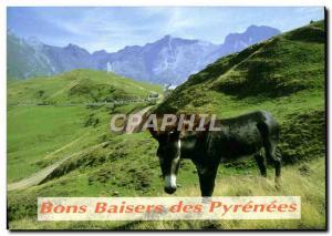 Modern Postcard With Love Pyrenean Donkey