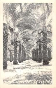 Palm Springs California Tree Garden Real Photo Antique Postcard K30377