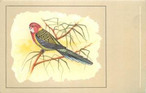 Roselle bird postcard