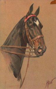 Vintage Postcard Portrait of Beautiful Horse Head Art Paintings Animal