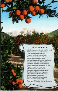 Linen Postcard CA Orange Grove - vintage - 1946