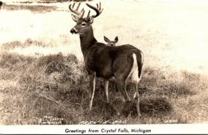Michigan Greetings From Crystal Falls Male Deer Real Photo