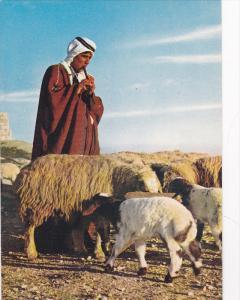 A Shepherd Boy Guarding His Flock, Jerusalem, Israel, 1950-1970s
