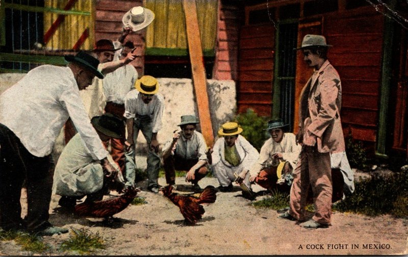 Mexico Typical Cock Fight 1923 Curteich