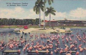 Florida Hallandale The Paddock Gulfstream Race Track
