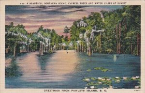 A Beautiful Southern Scene Cypress Trees And Water Lilies At Sunset Greetings...