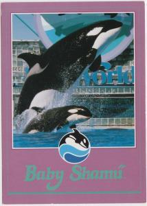 Baby Shamu, Killer Whale, Sea World, unused Postcard