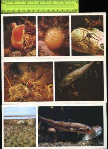 169073 Russia Underwater World of WHITE SEA Fish SET 15 Cards